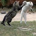 Cat's fight