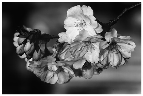 Infrared_Flowers