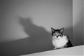 Shadow Cat