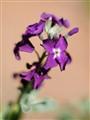 1.2 Flower