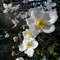 DSC_2376 Flowers V2