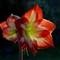 Schwany Flower Org