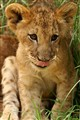 Cute, cuddly cub