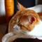 Orange Cat Relaxing