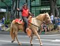 Paniolo - Hawaiian Cowboy