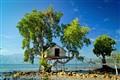 tree house2