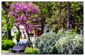 Spring in my street