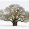 2013 snow WPO 004