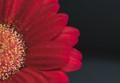 ANESSELRODT--FLOWER-10.2