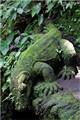 Bali lizard