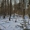 Harku forest 2: