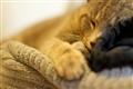 Friday Nap
