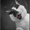 _cat_DSC09824asdpr
