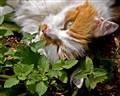 Catnap in the Catnip