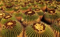 Prickly repetition