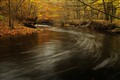 Forest stream - autumn