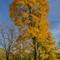 Fall in Trakai, Lithuania[1]