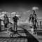 Walking the Dogs - Amble Pier, Northumberland UK