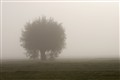 lonely misty tree
