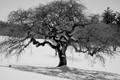 winter_tree-sm