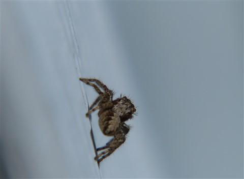 spider1030-746jpg-1030746