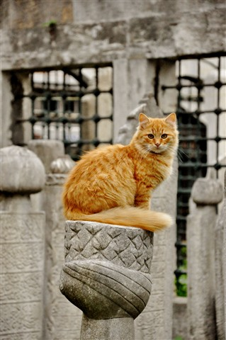 cat at the cemetery