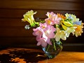 Freesias & Forget-Me-Nots