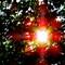 Sun-Through-Tree-Web