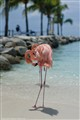Flamingo_beach