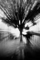 Tree Radiance
