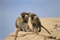 Monkeyss