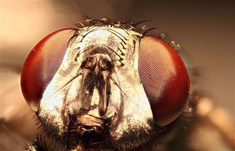 buzz-web