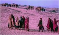 Colour slides,at dawn,the camels and female walking for a purpose,Ajmer,Rajasthan, India