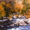 Fall Foliage - Oak Creek Canyon