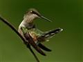 Long lens, short bird
