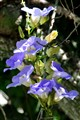 Purple Flower Vine