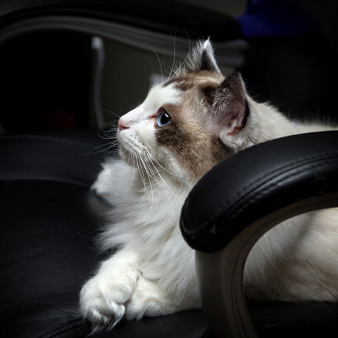 Skye on Office Chair