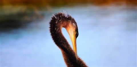 Bird Wide