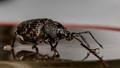 bug_002
