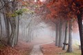 A path to the autumnal mist