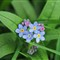 Floral macro close-up