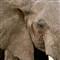 20021028-1007-TNP-ElephantCU-WEB