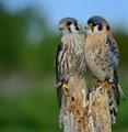 June Love Birds