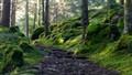 Trail to Lake Crozet