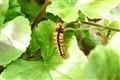 Caterpillar3200