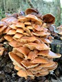 Stack of Mushrooms