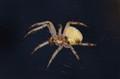 First Spider