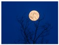 entrapped moon