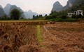 Karst Pinnacles with Rice Field
