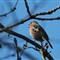Bird Hard_Soft 017